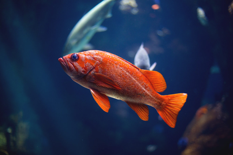 goldfish autism research